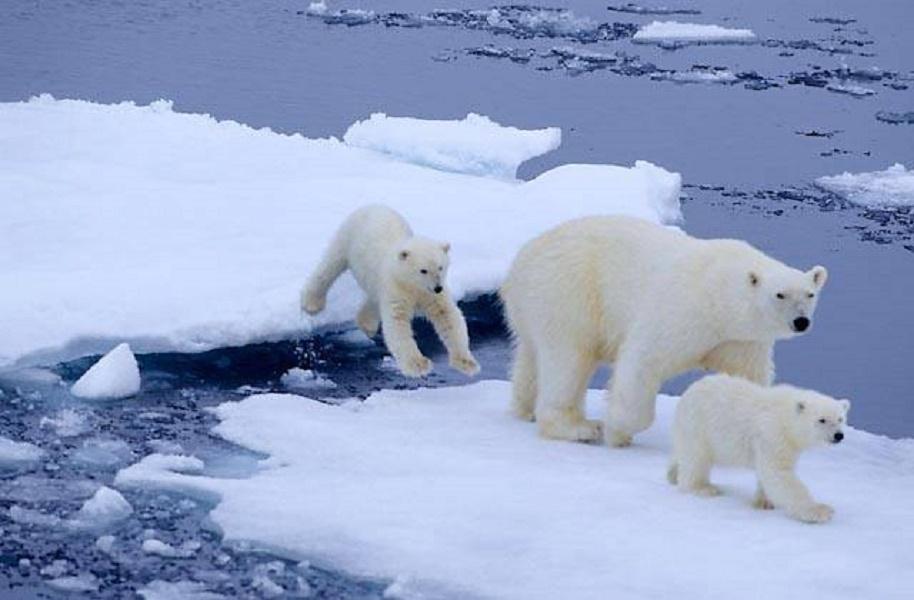 Resultado de imagen de foto de polo norte sin derechos de autor