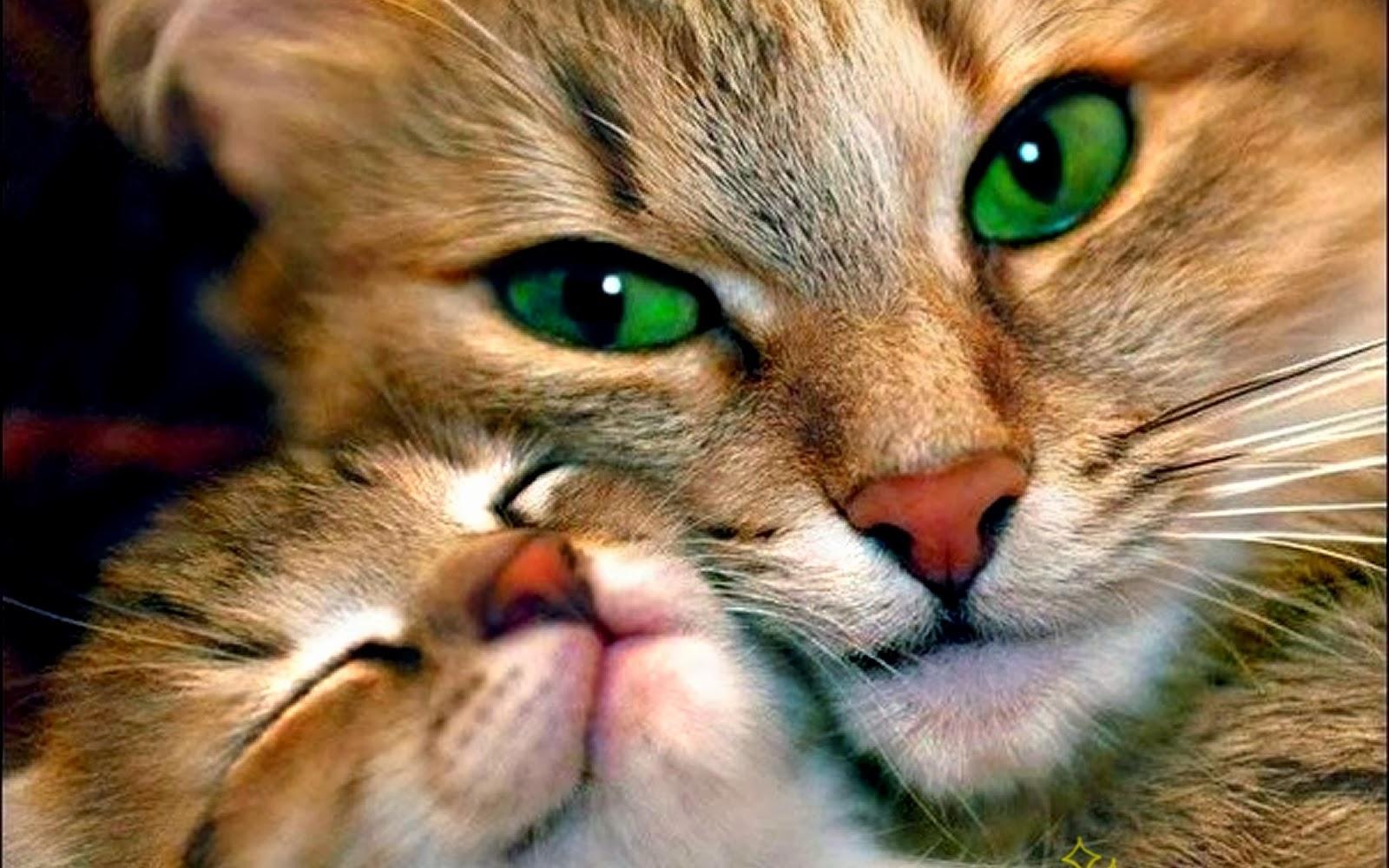 Resultado de imagen para gatos lactantes